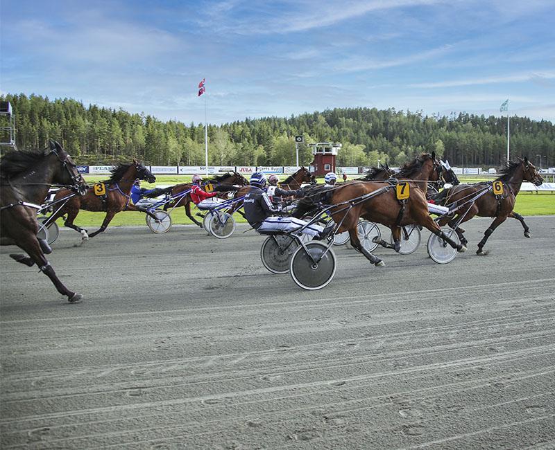 Årjängstravet Foto: Lars Brander